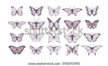 set of butterflies  ink