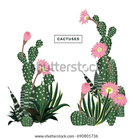 Set of cactus, hand drawn vector illustration