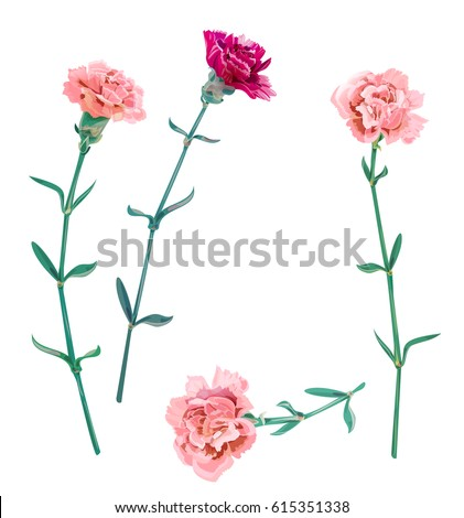 Set of carnation schabaud, pink, red, scarlet flowers, green stem, leaves on white background, collection for Mother's Day, victory day, digital draw, vintage illustration, vector
