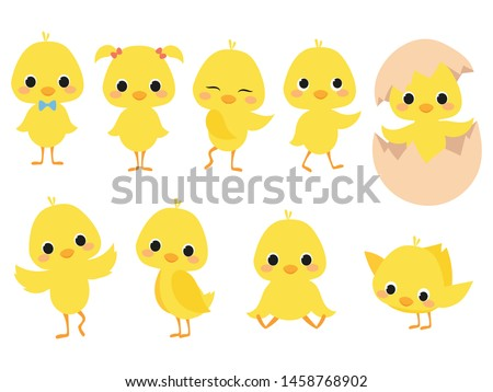 Set of cartoon chicks. A collection of cute yellow chicks. Vector illustration of little chickens for children. Stockfoto ©