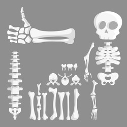 set of cartoon human bones, skeleton parts