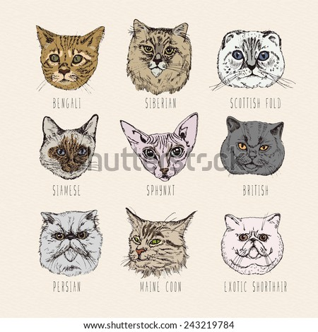 Set of cats. Breeds. Siamese, British, Siberian, Persian, Scottish Fold, Maine Coon, Bengal, Sphynx in doodle hipster vintage style.