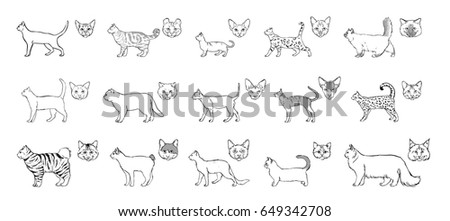 set of cats breeds  side view