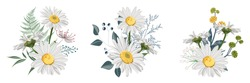 Set of Chamomile (Daisy) bouquets, white flowers, buds, green leaves, fern and berries. Botanical illustration on white background for design, hand draw illustration in vintage style.