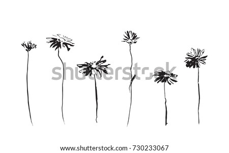 stock-vector-set-of-chamomile-flowers-vector-image-painted-by-ink-black-hand-drawn-stylized-illustration