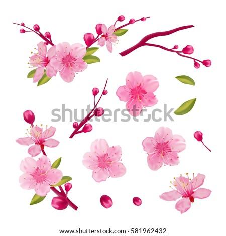 Set of cherry blossom, leaves, branch. Spring sakura design elements.