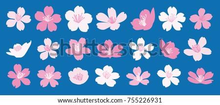 set of 21 cherry blossom vector