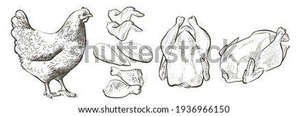 Set of chicken meat raw portionS of chicken meat raw portions fillet, thigh, breasts, wings and legs, drumsticks. Butcher shop, farmer market. Farm animal. Vintage vector line realistic sketch illustr Photo stock ©