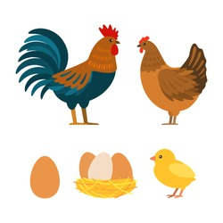 Set of chicken, rooster, eggs. Flat vector illustration isolated on white background