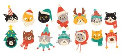 Set of Christmas cats wearing winter accessories like hats and scarves. Vector illustration of cute animal faces in festive outfits displaying various emotions in colorful cartoon style.
