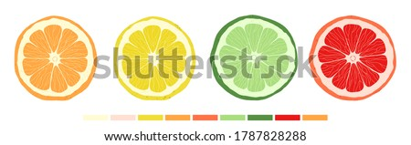 Set of citrus slices of lime, orange, grapefruit and lemon. Vector stock illustration. Textured effect on the skin. The style is hand-drawn and cartoonish. All objects are isolated. Сток-фото ©