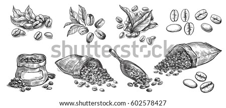 set of coffee beans in bag in