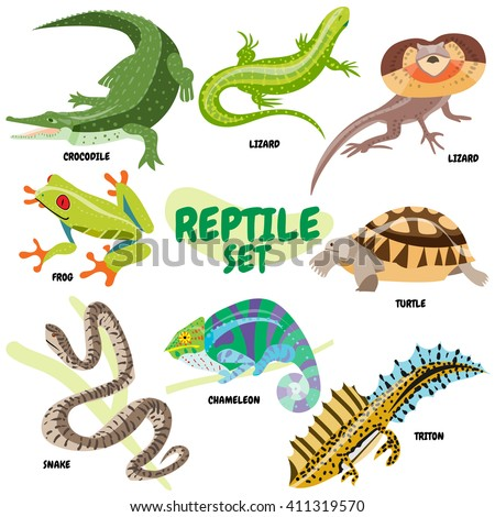 set of cold blooded reptiles  a
