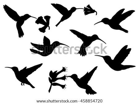 set of colibri silhouettes
