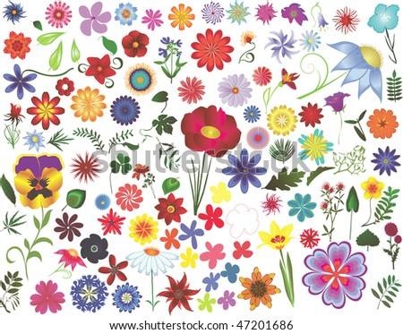 Set of colored vector floral design elements: flowers and leaves