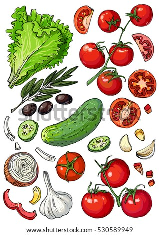 Set of colored vegetables. Fresh food. Lettuce, tomatoes, cucumber, olives, garlic line drawn on a white background. Vector illustration.