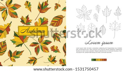 Set of colorful autumn leaves. Contour leaves. Autumn leaves on a white background. Pattern. Template for text. Maple and oak leaves.