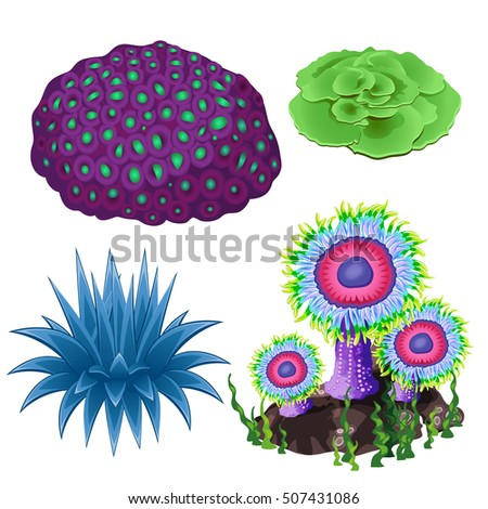 set of colorful corals and