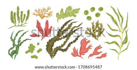 Set of colorful hand drawn edible algae vector graphic illustration. Collection of different aquatic plants isolated on white background. Natural drawing botanical seaweed Сток-фото ©