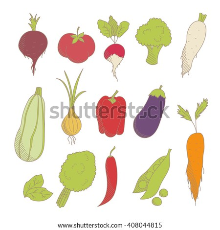 Set of colorful hand drawn sketched vegetables: tomato, onion, beets, zucchini, eggplant, peppers, broccoli, peas, lettuce, carrot #408044815