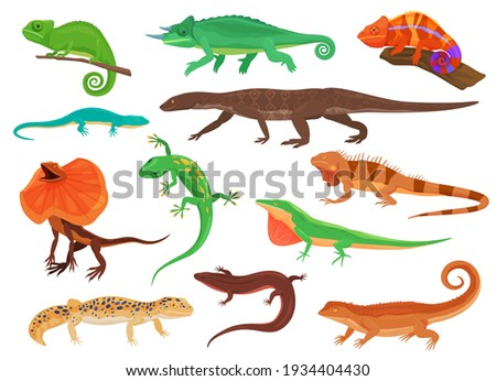 Set of colorful lizards. Different species of lizards. Vector illustration on a white background Foto stock ©