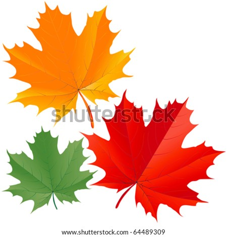 Set of colorful maple leaves