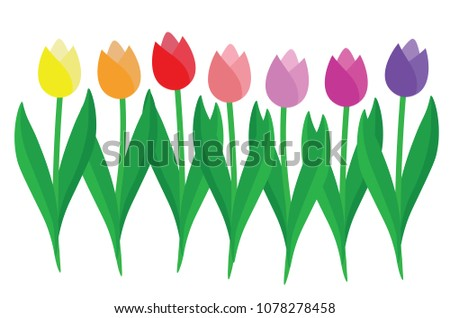 set of colorful tulips isolated