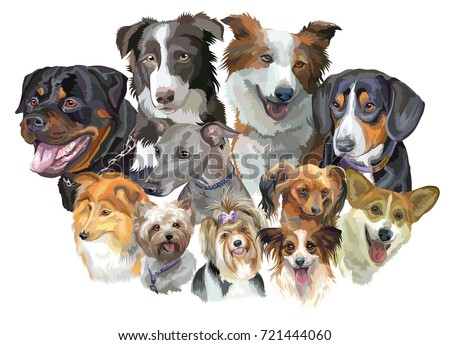 stock-vector-set-of-colorful-vector-portraits-of-dog-breeds-rottweiler-border-collie-toy-biewer-and