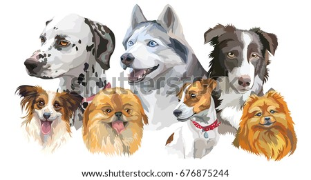 stock-vector-set-of-colorful-vector-portraits-of-dog-breeds-siberian-husky-border-collie-dalmatian-jack