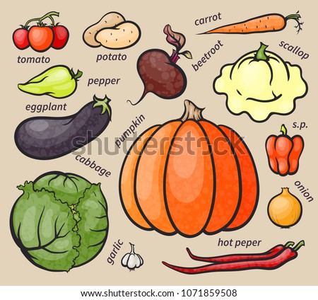 Set of colorful vegetables, healthy organic food, vector cartoon  #1071859508