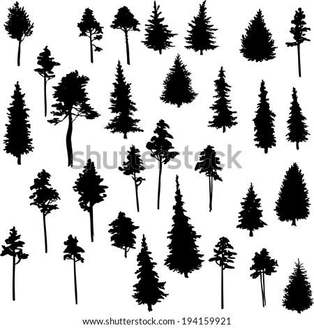 set of conifer trees, nature design element, vector illustration