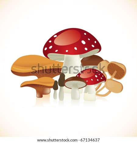 Set of cool mushrooms in white background