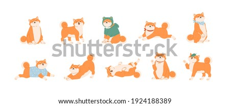 Set of cute Akita Inu dogs in various postures. Funny Japanese Shiba Inu puppies waxing with paw, lying, running, playing and sitting. Colored kawaii flat vector illustration isolated on white