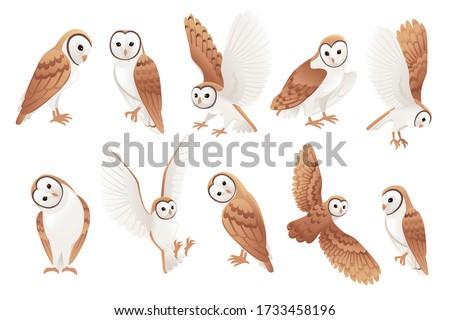 set of cute barn owl  tyto alba