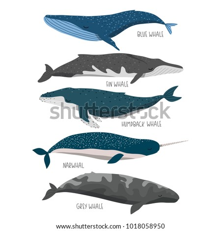 set of cute cartoon whales. blue, fin, humpback, gray whales and narwhal on white background. can be used like stickers or for different designs