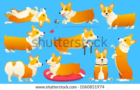 Set of cute dogs breed Welsh Corgi Pembroke on blue background. A domestic pet, a happy royal animal for girls. Funny Red haired puppy looks like a fox. Vector illustration.