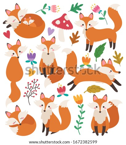 Set of cute foxes vector illustrations in flat style. Fox cartoon characters clip art collection. Woodland animal. Forest animals. Graphic elements. Fox with sleeping, standing, running, sitting pose.