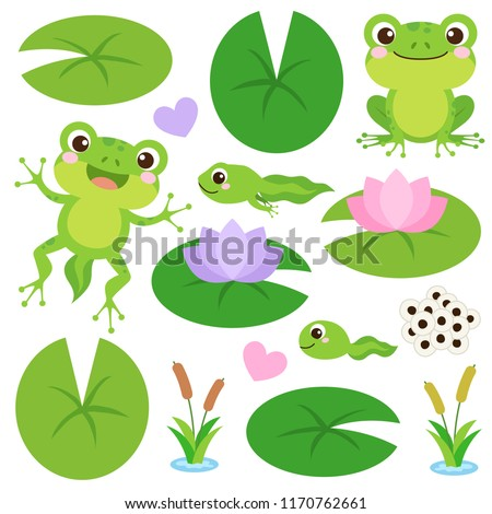 Set of Cute Frogs. Egg masses, tadpole, froglet, frog, hearts, plants, water lily leaf and flower. Frog's life cycle clip art. Vector illustration.