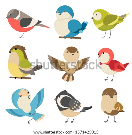 Set of cute little colorful birds isolated on white background. Common house sparrow couple, male and female. Small birds in cute cartoon style. Isolated vector clip art illustration