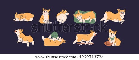 Set of cute little corgis playing, lying, sleeping and running. Funny active dog or puppy. Front, back and side view of adorable crazy doggy. Colored flat vector isolated illustration of happy pet Stock photo ©