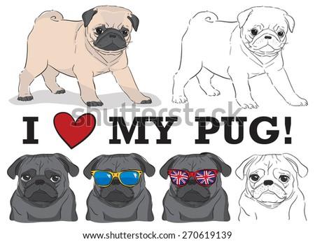 set of cute pugs in sunglasses