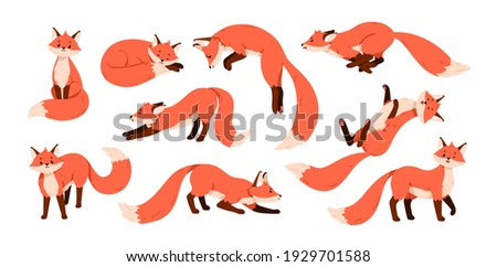 Set of cute red foxes with black paws isolated on white background. Happy funny forest animal running, sitting, hunting, sniffing, sleeping, relaxing and stretching. Colored flat vector illustration Stock fotó ©