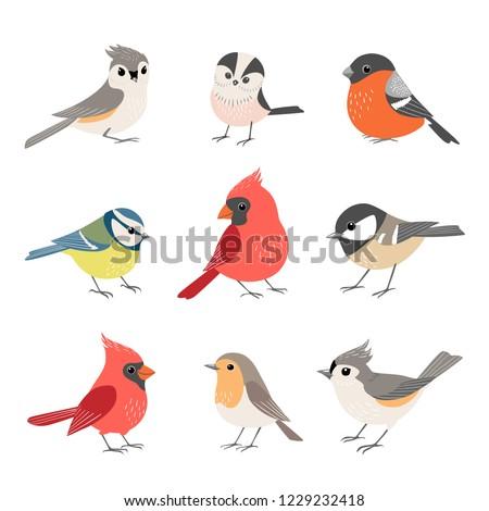 set of cute winter birds