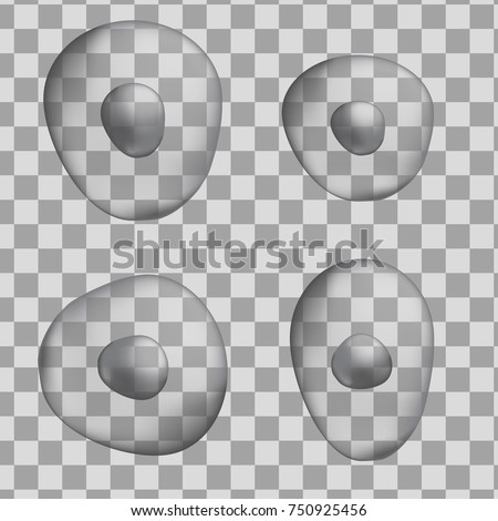 Set of 3d grey oval human cells isolated on transparent background. Realistic vector illustration. Template for medicine and biology presentations, flyers, posters. Eps10.