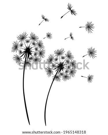 set of dandelions black