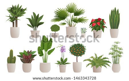 Set of decorative houseplants to decorate the interior of a house or apartment. Collection of various plants in pots on a white background. Vector illustration in cartoon style