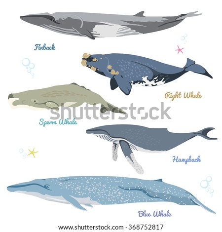 set of 5 detailed whales from