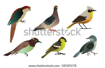 Set of different birds. Details vector illustration.