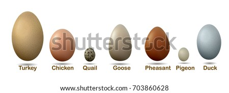 set of different birds eggs