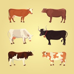 Set of different  breeds cows, isolated. Vector illustration of cute milk mammal. Collection cartoon bull and calf vector.